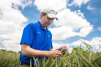 Chad Lee examines cereal rye in a test plot.