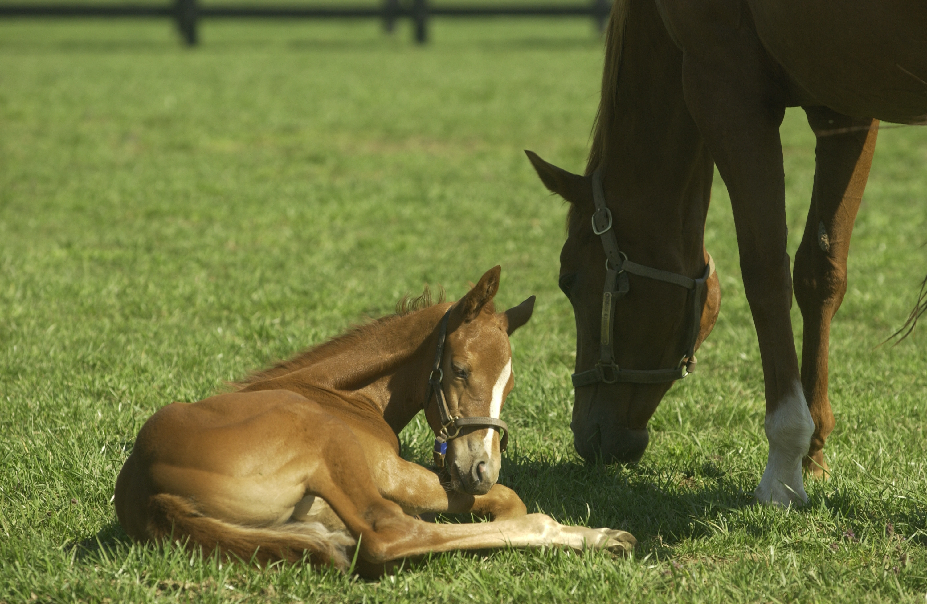 UK Gluck Center and industry leaders responding to an uptick of foal diarrhea cases