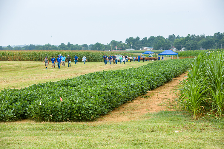Corn, Soybean and Tobacco Field Day packed with timely information, networking opportunities