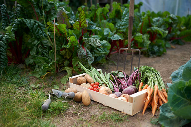 From the Ground Up - Starting a vegetable garden (audio)