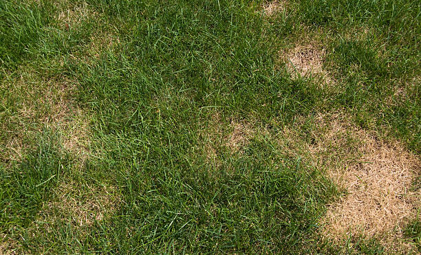 From the Ground Up - Bare spots in your lawn (audio)