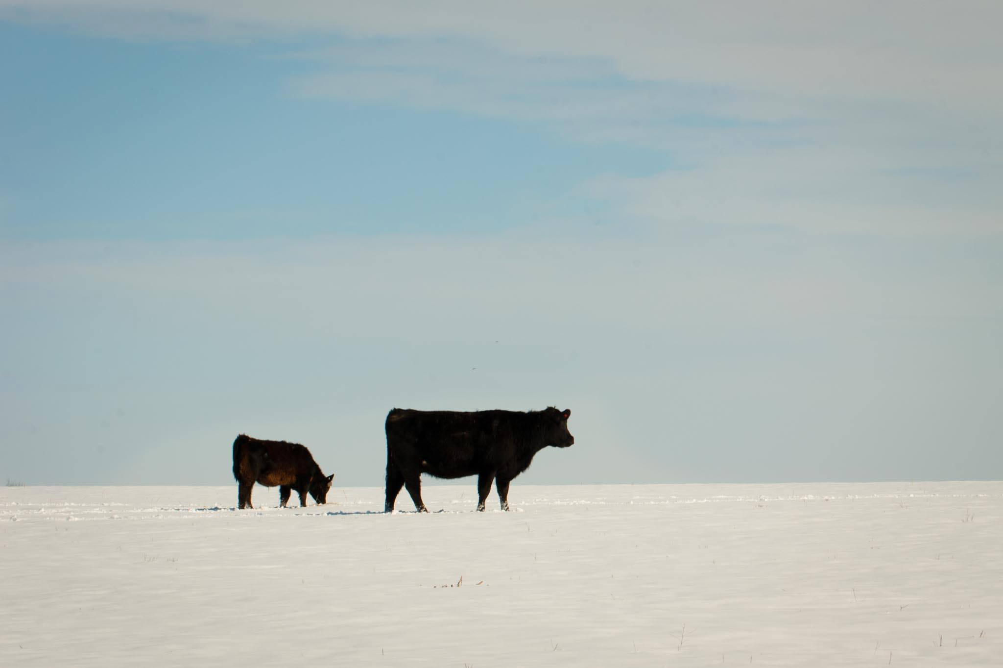 Early winter blast prompts livestock producers to think about cold months ahead