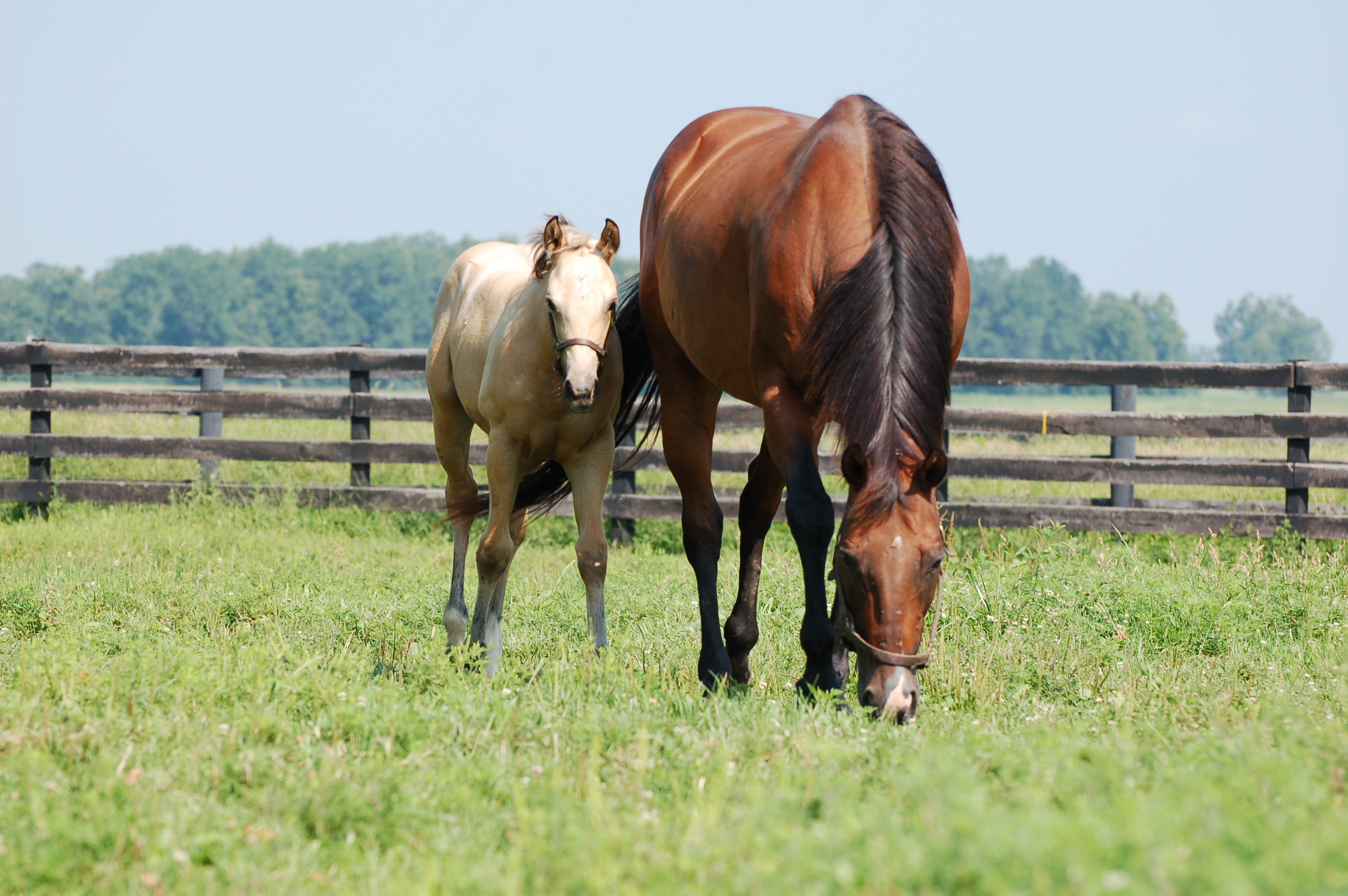 UK Equine Farm and Facilities Expo to be held Sept. 28