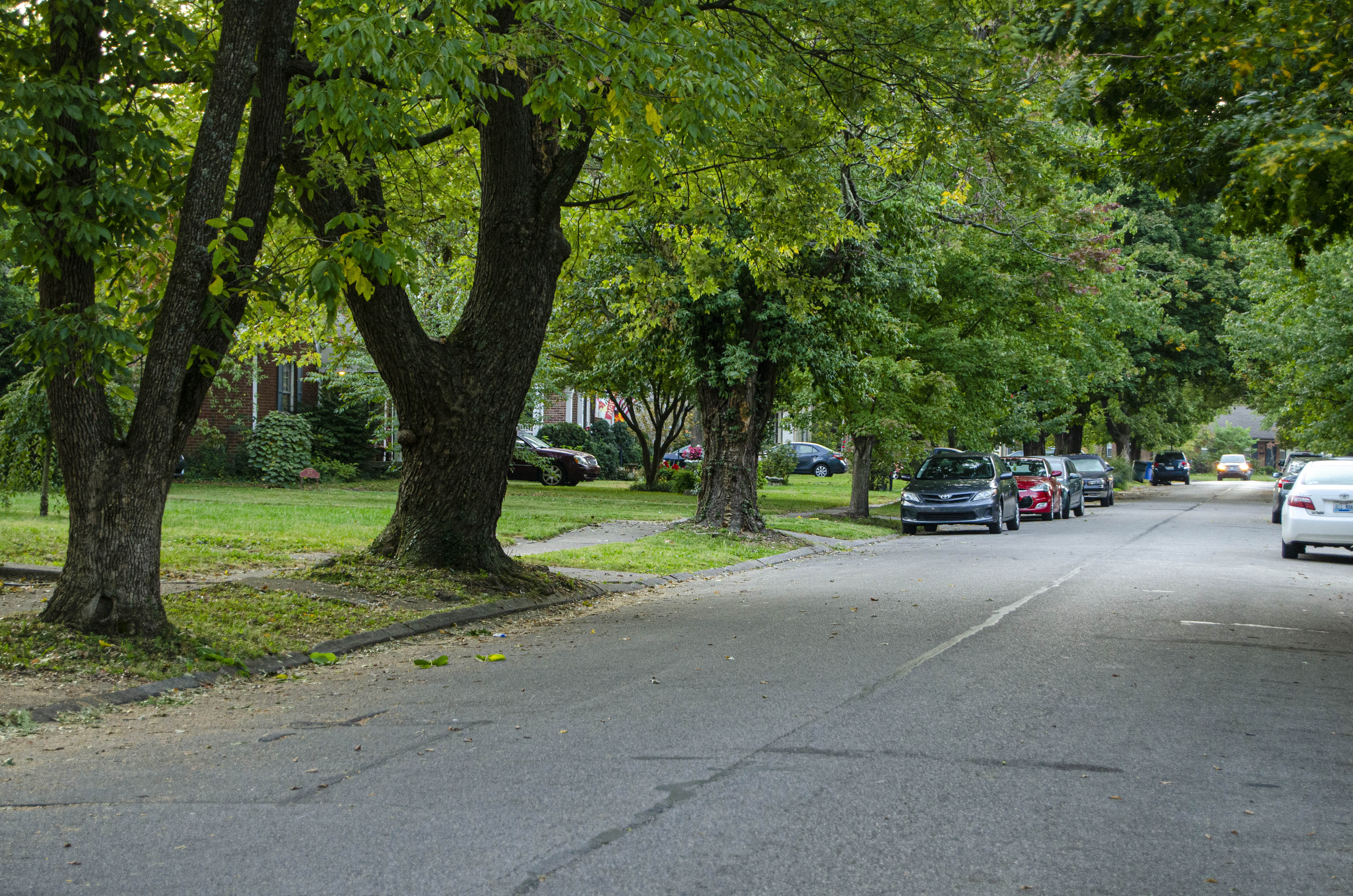Tree Week 2020 highlights the benefits of urban trees