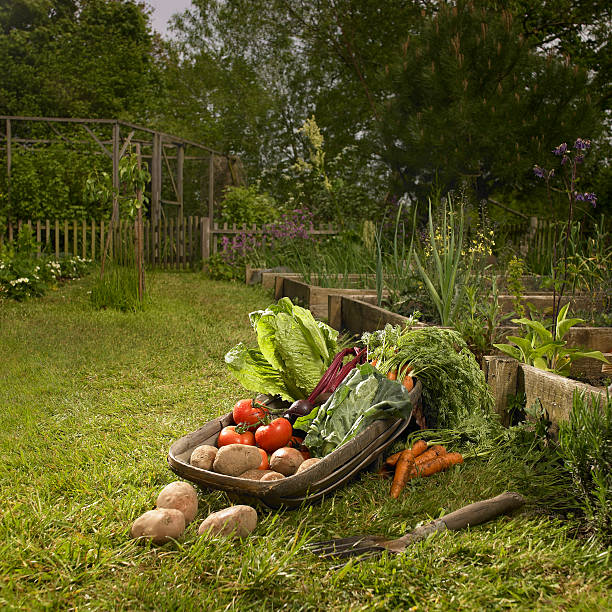From the Ground Up - Crops for the fall vegetable garden (audio)