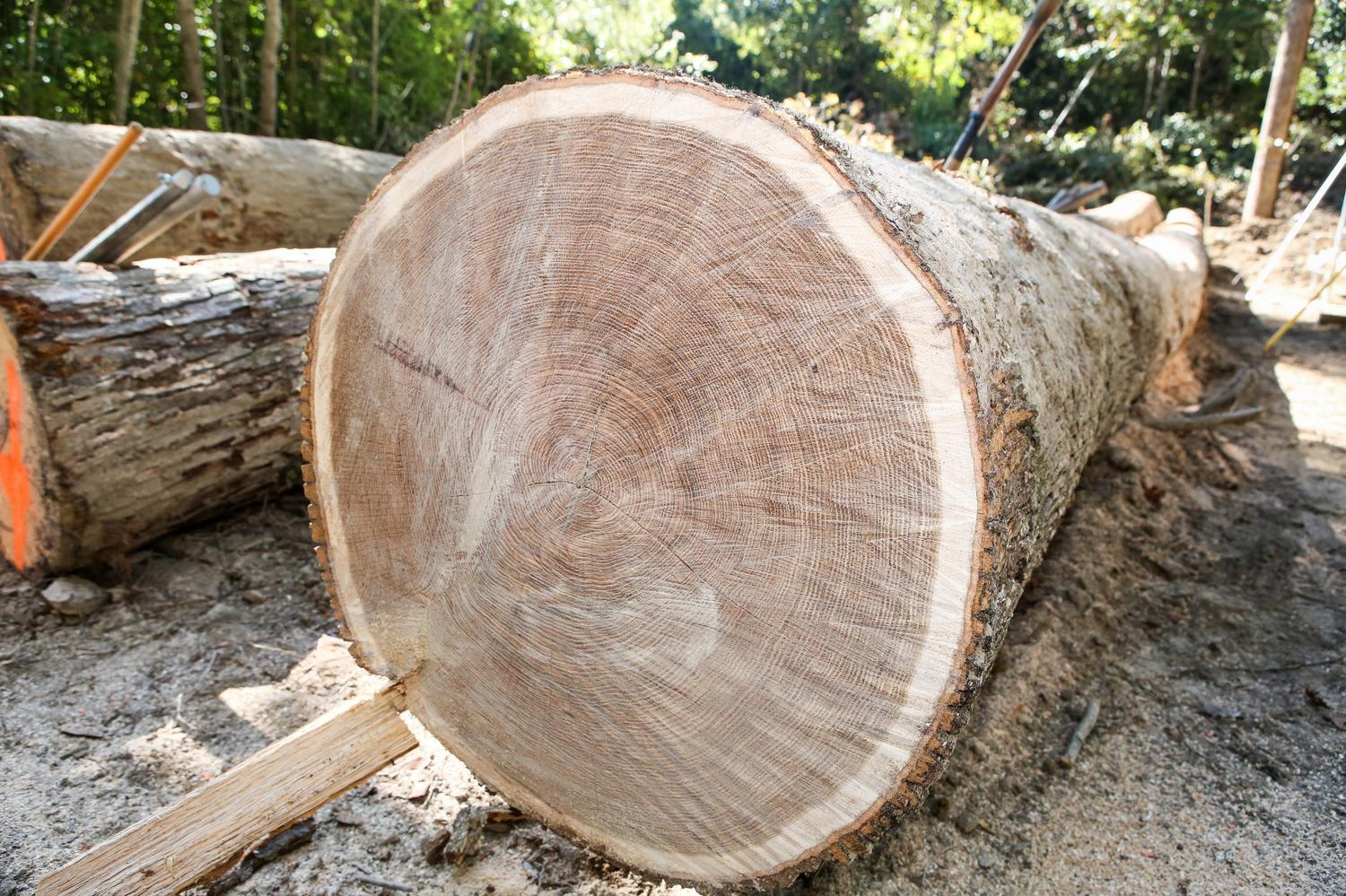 Kentucky Wood Expo to highlight state's forestry industry