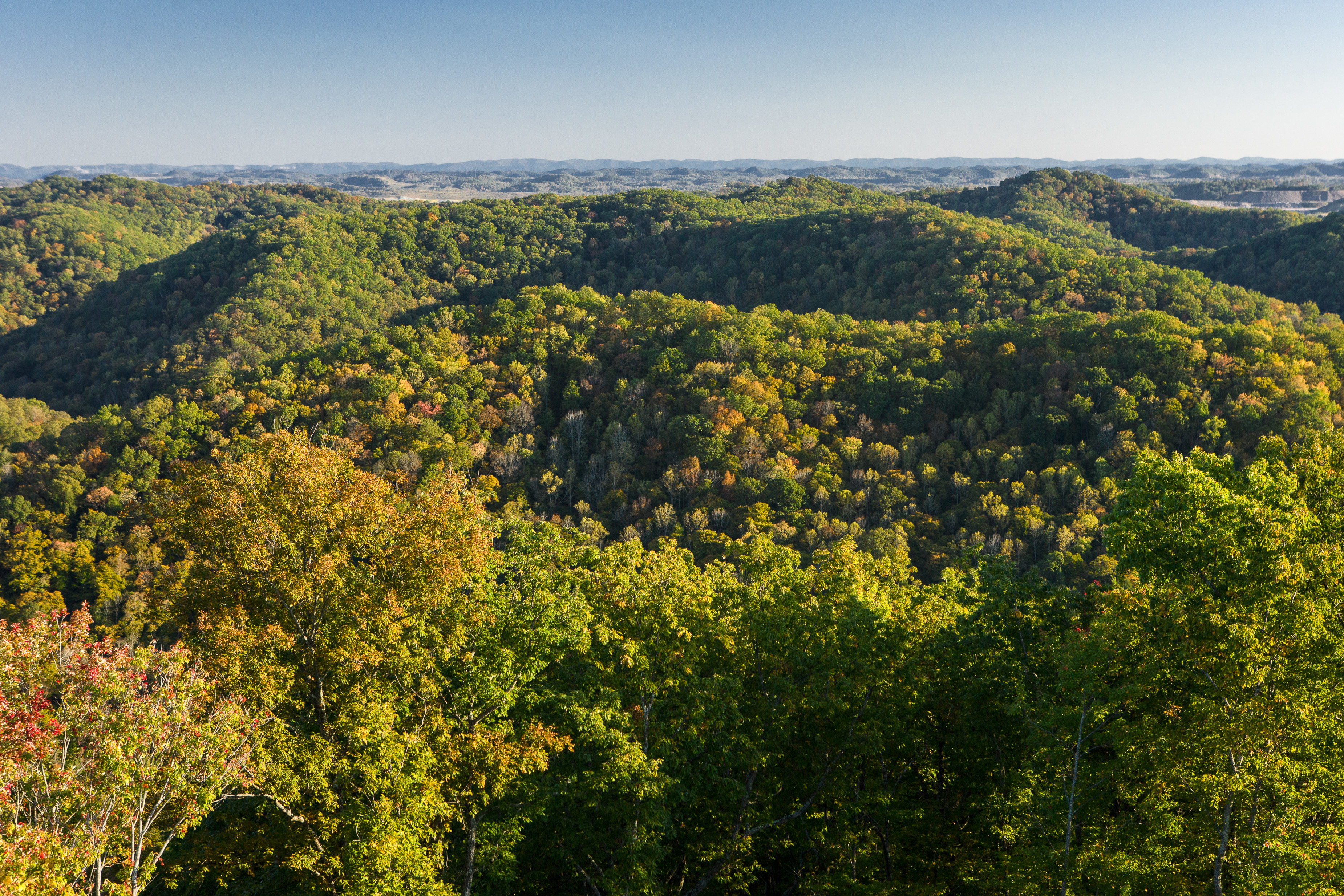 National Forest Products Week to highlight state's woodlands