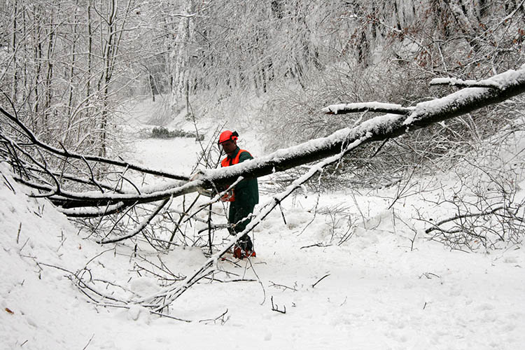 UK forestry extension offers resources for woodland winter storm damage