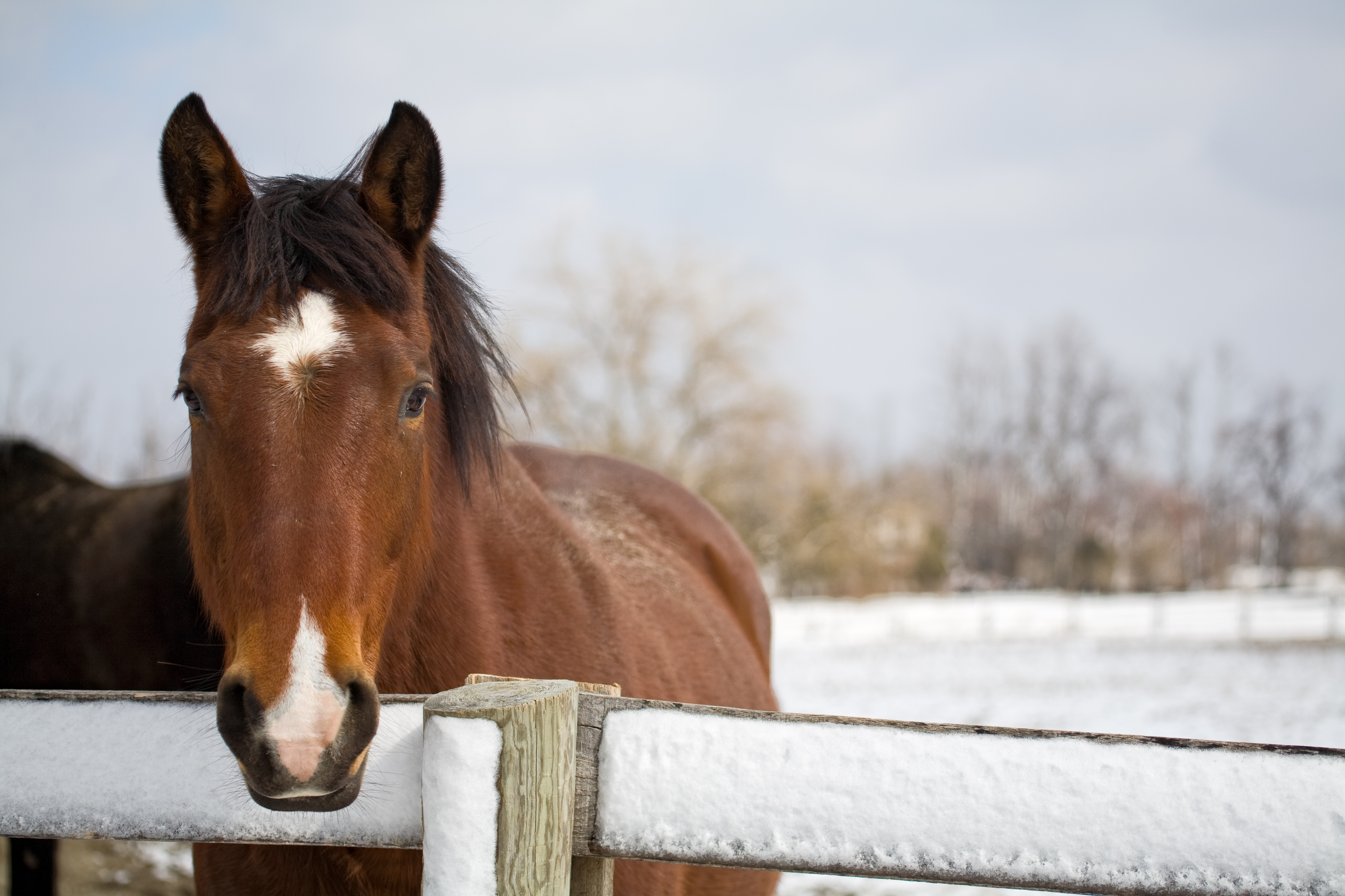 Horses need a little extra TLC during cold, wet winter weather