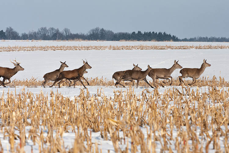 UK releases list of deer processors