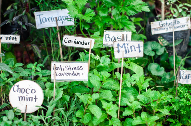 From the Ground Up - Growing and harvesting herbs (audio)
