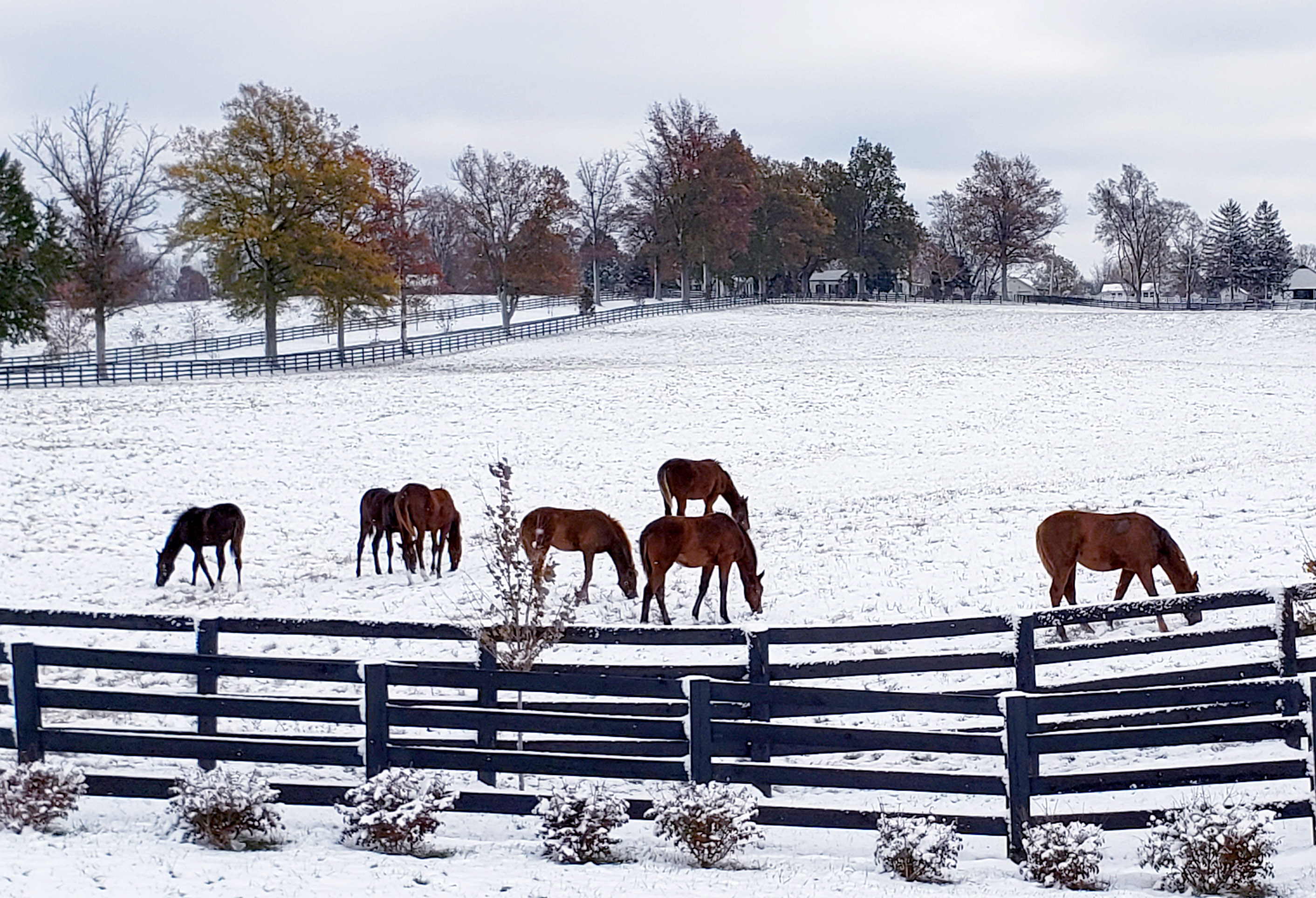 Horse owners should have enough hay for winter