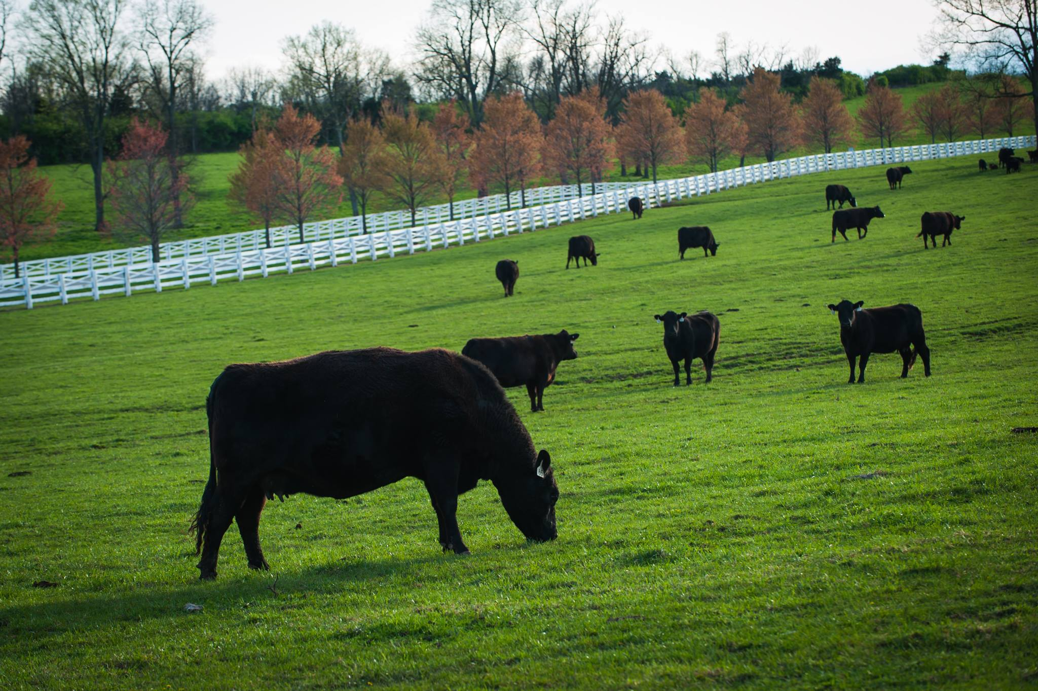 UK to host fall grazing school in Woodford County