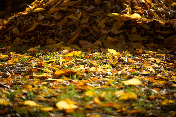 From the Ground Up - Leaf mold (audio)