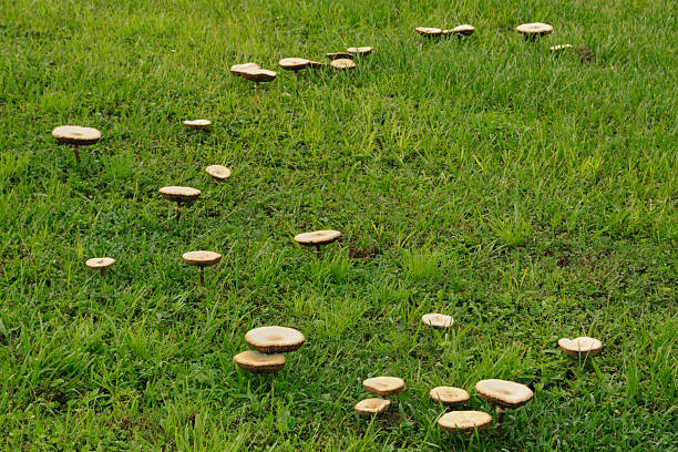 From the Ground Up - Mushrooms in the lawn/landscape (audio)
