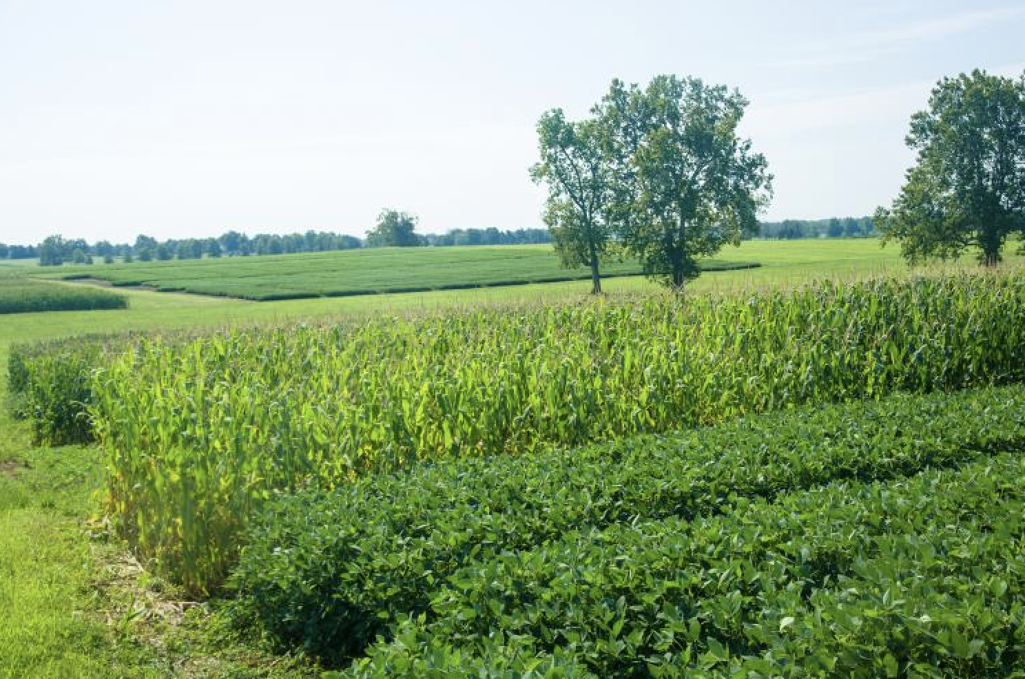 UK to host virtual Corn and Soybean Field Day