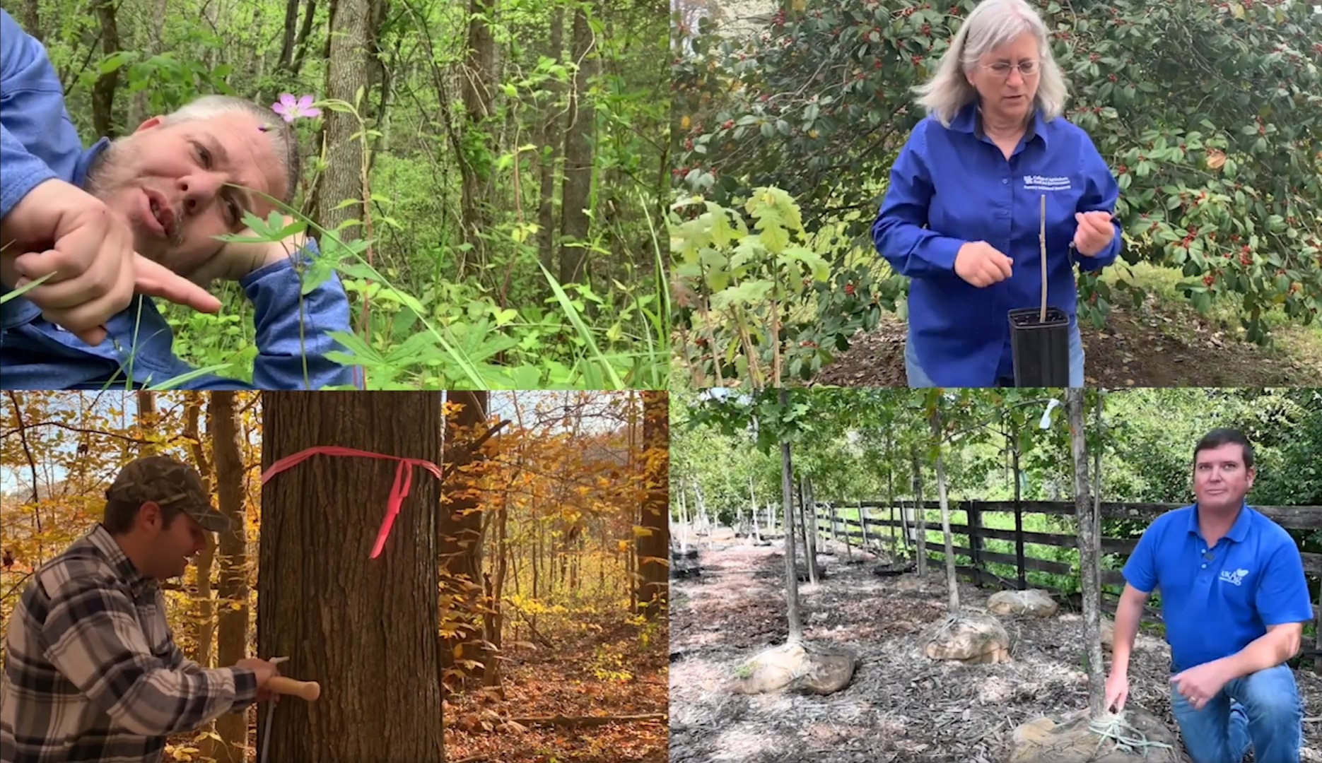'From the Woods Today' August segments highlight hummingbirds, vultures and more