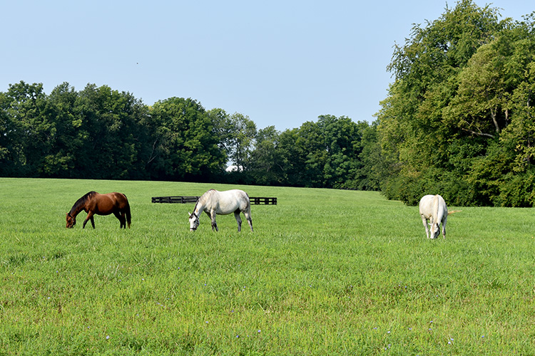 Pasture renovations will help horse farm implement rotational grazing