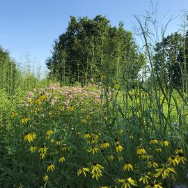 The Knobs prairie meadow on the Walk Across Kentucky Trail at The Arboretum