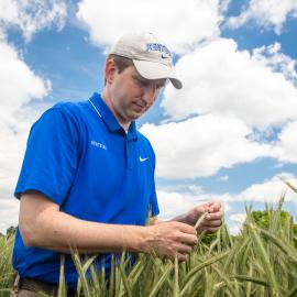 Chad Lee, director of UK Grain and Forage Center of Excellence, examines rye in the field. Photo by Stephen Patton