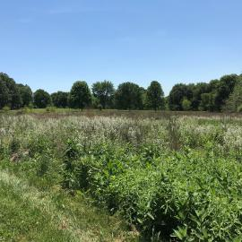 The wildflower meadow in the Shawnee Hills Collection of the Walk Across Kentucky at The Arboretum in Lexington. Photo provided by Emily Ellingson