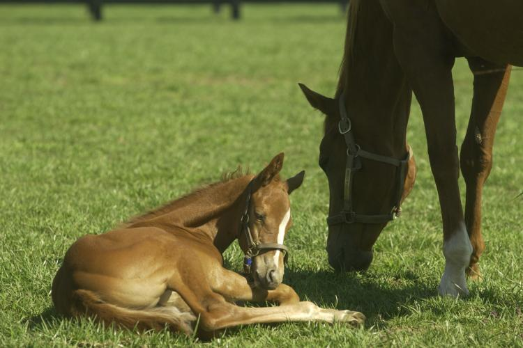 Foal with mare