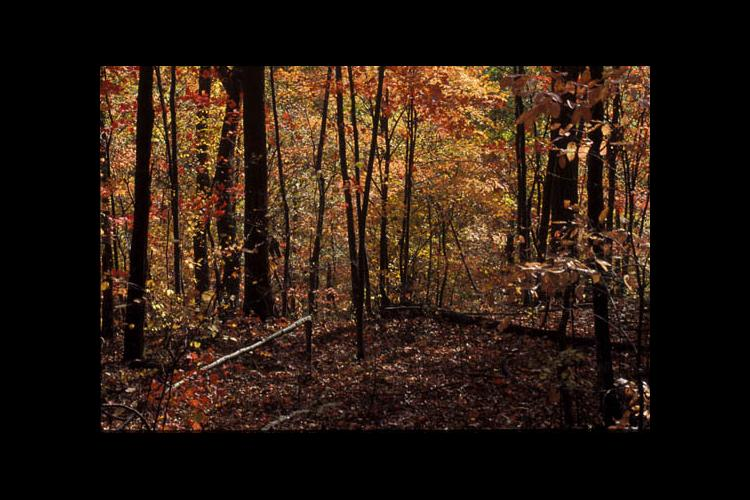 Kentucky woods in autumn