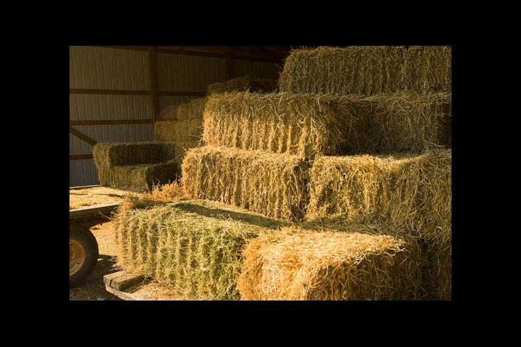 Hay is for horses during heatwave, drought that are hitting the state.