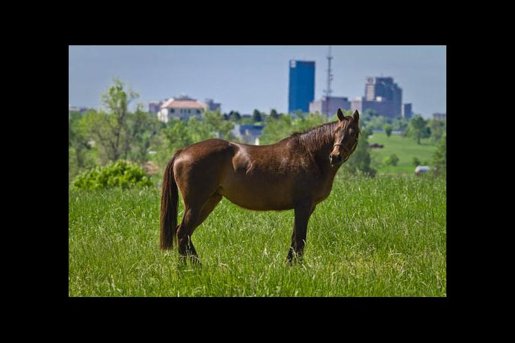 The 2012 Kentucky Equine Survey's purpose is to get an accurate inventory of all horses in the state.