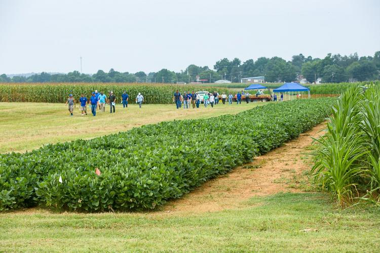Participants tour UK research plots at a previous Corn, Soybean and Tobacco Field Day. Photo by Matt Barton, UK agricultural communications.
