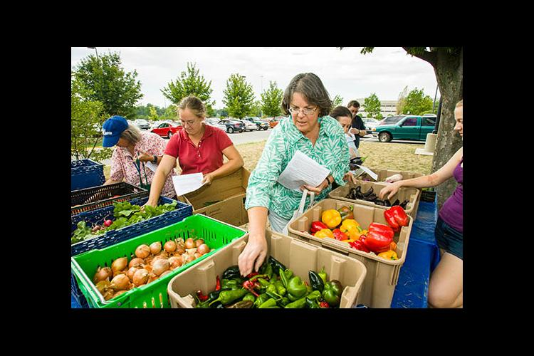 UK CSA shareholders pick up their weekly share of produce at E. S. Good Barn.
