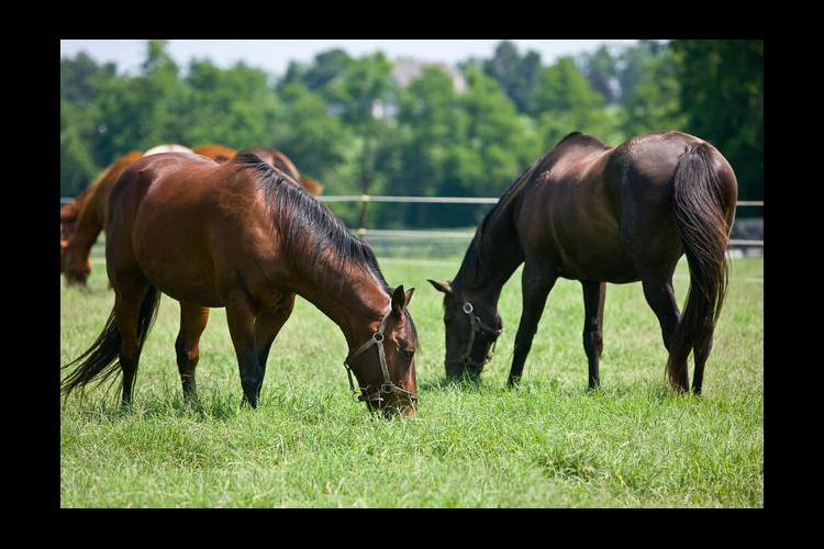 The grazing conference will have information related to grazing practices for horses, cows, sheep and goats.
