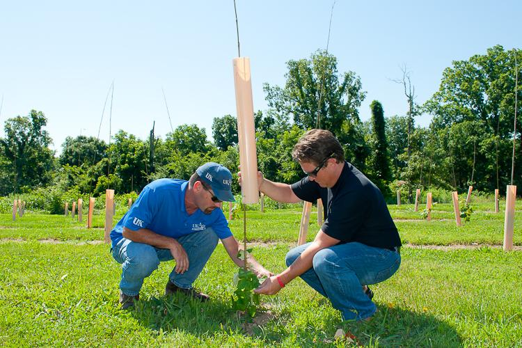 David Embrey, Edmonson County ANR agent, left, and Nick Noble inspect grapevines at Noble's vineyard.