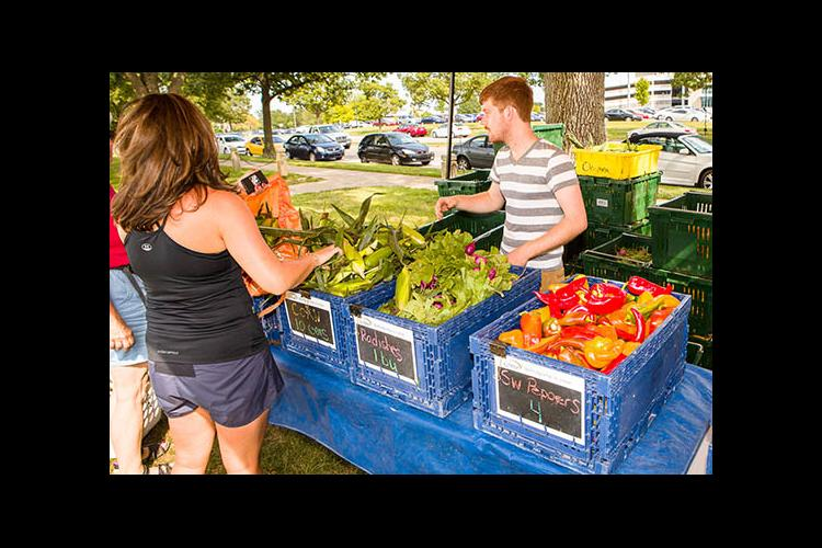 Share owners collect their weekly produce at the UK CSA farm stand.