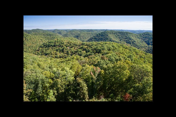 Forests in Eastern Kentucky