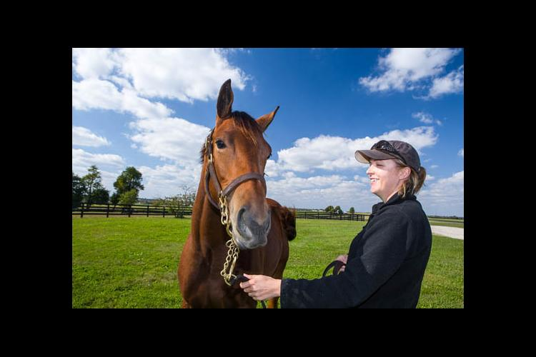 """New research asks """"Does working with horses develop emotional intelligence competencies in humans?"""""""