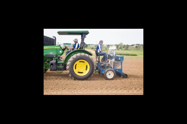UKAg researchers plant research plots of industrial hemp.