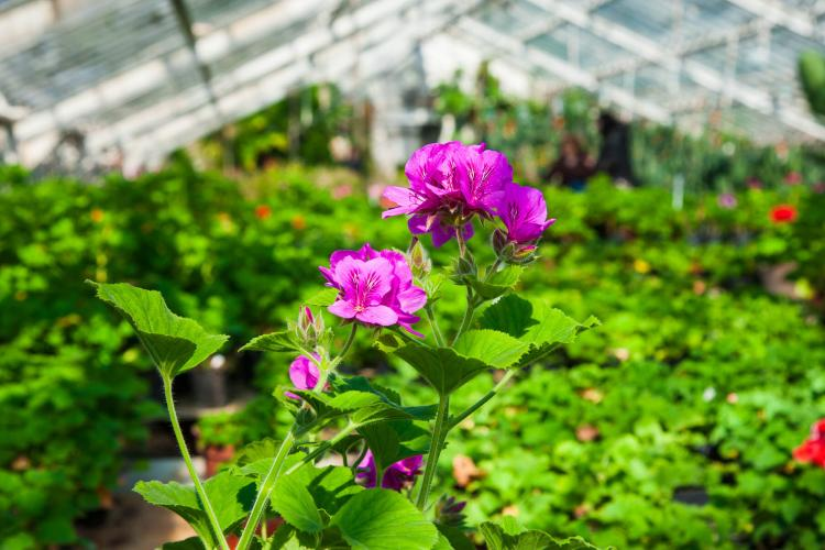 Greenhouses are one example of an agribusiness.