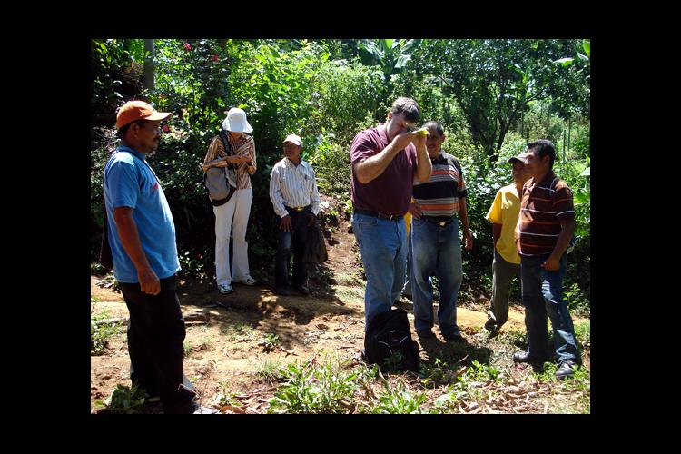 UK entomologist Ric Bessin, center, identifies whiteflies on tomato leaves for El Salvadoran farmers.