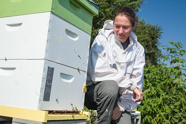 Clare Rittschof with her honey bee research hives at Spindletop Research Farm in Lexington. Photo by Steve Patton, UK agricultural communications.