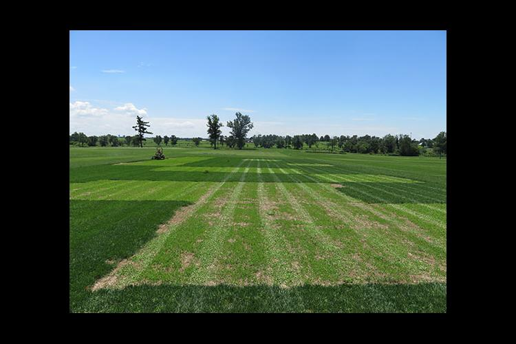 Clover research trials at UK's Spindletop Research Farm
