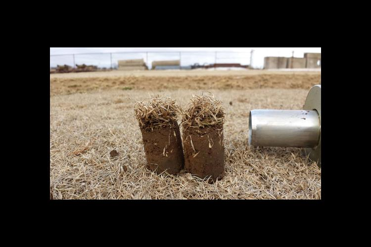 Grass samples taken with a cup-cutter, a common tool used in the golf and turf industries.