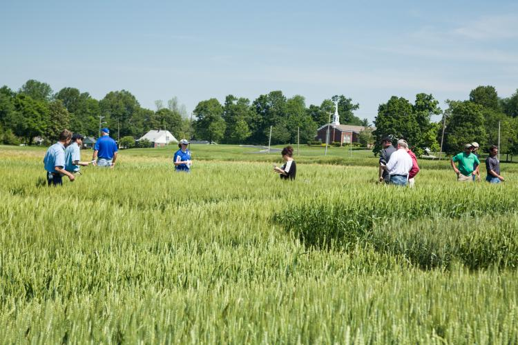 2017 field day participants tour UK's variety trials.
