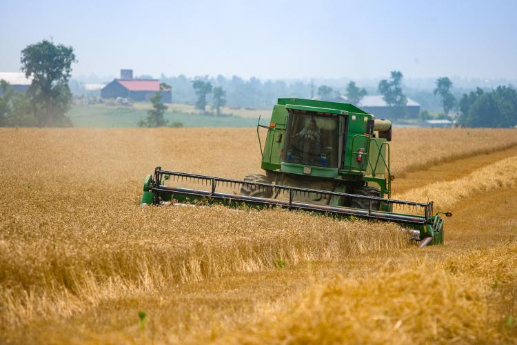 Photo of a previous year's wheat harvest. Photo by Matt Barton, UK agricultural communications.