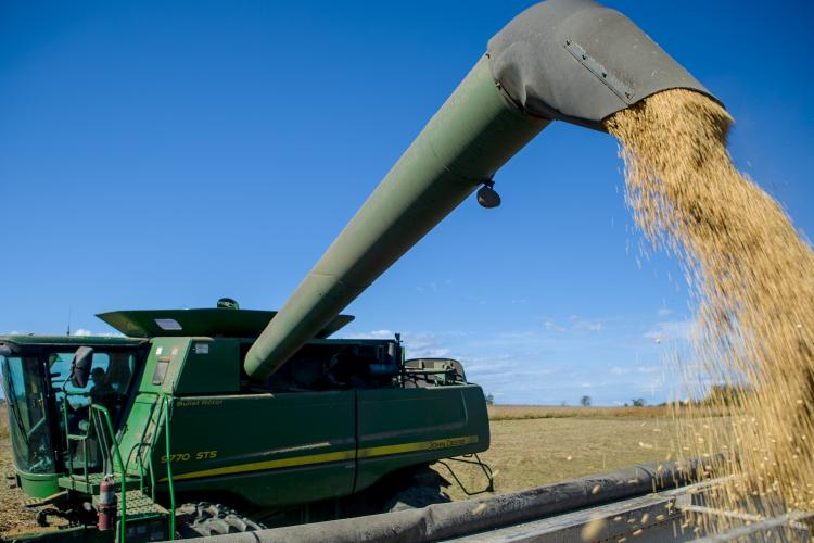 A combine harvesting soybeans. Photo by Matt Barton, UK agricultural communications.