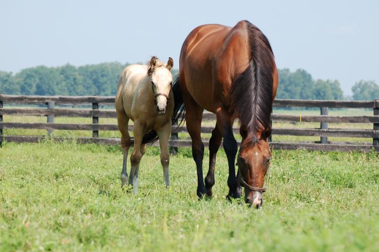 The UK field day will allow participants to visit a premier Central Kentucky horse farm and learn about pasture management. Photo courtesy of UK College of Agriculture, Food and Environment.