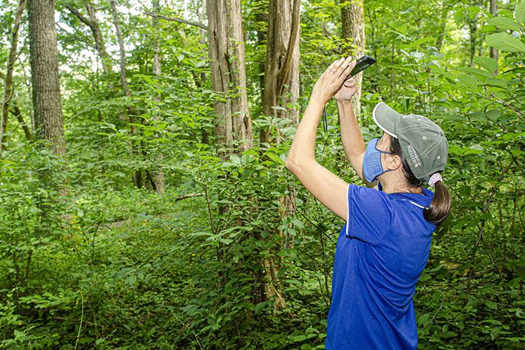 Ellen Crocker takes a picture of the woods with her cell phone.