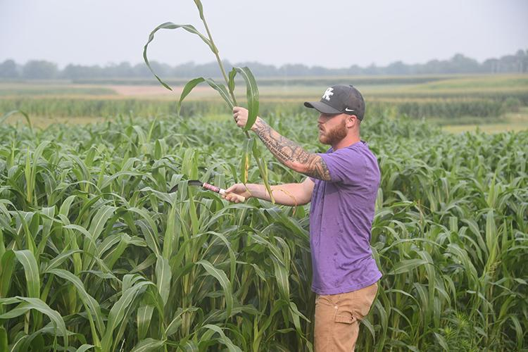 Brandon Dooley harvests sorghum-sudangrass for his research project. Photo by Jordyn Bush, UK graduate student.