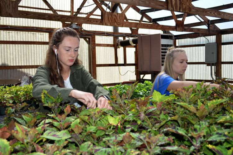 Elliott County High School students Amber Moore, left, and Molly Lewis deadhead plants in the school's greenhouse.