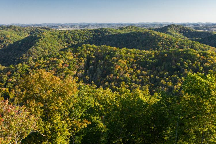 Kentucky's forests help spur growth and development important to the state's success.